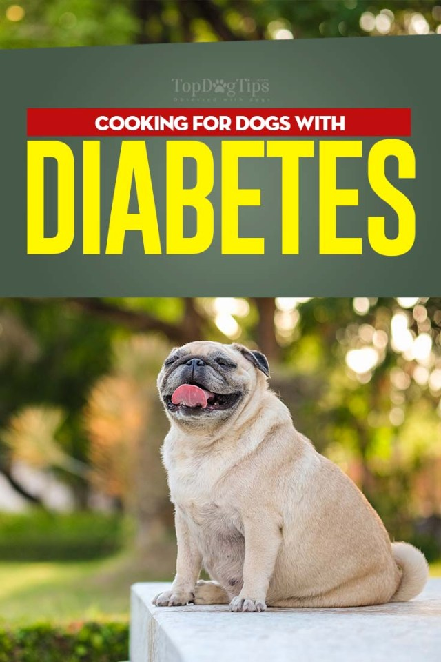 Tips on Diabetic Dog Diet and What to Feed a Diabetic Dog