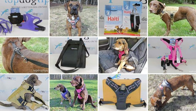 Types of Dog Harnesses Compared