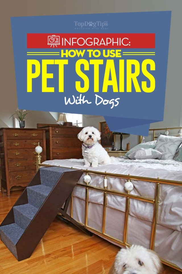 Guide on How to Train Dogs to Use Stairs and Ramps