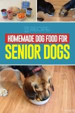 Homemade Food for Senior Dogs Recipe