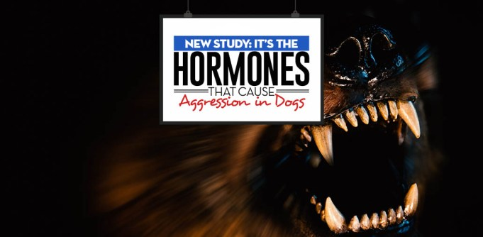 New Study - Scientists Found Hormones Causing Aggression in Dogs