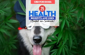 Top 25 Health Benefits and Uses of CBD for Dogs