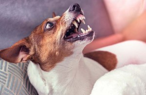15 Facts About Fear Aggression in Dogs