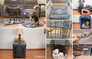 Best Types of Crates for Dogs