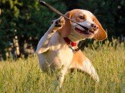 Dealing With Dog Training Problems