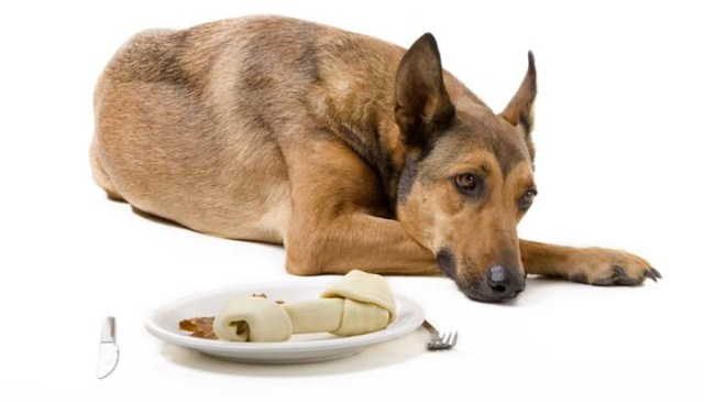 How to Prevent Stomach Upset in Dogs