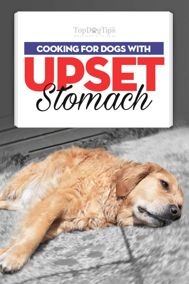 Guide on What to Feed Dog With Upset Stomach