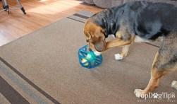 Outward Hound Puzzle Cube