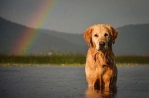 The Rainbow Bridge and Dealing with Pet Loss