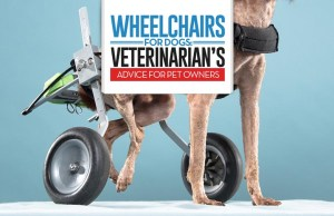 The Vet's Guide on Wheelchairs for Dogs - 9 Things You Must Know
