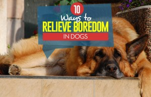 10 Ways to Relieve Boredom in Dogs