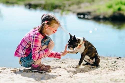 Boston Terrier for Kids