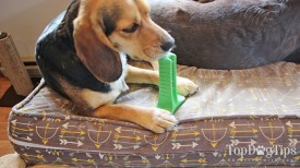 Brite Bite Brushing Stick for Dogs