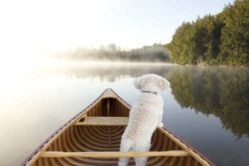 8 Safety Tips for Boating With Dogs