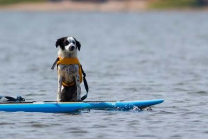 Doggy Paddle Is What You're Missing