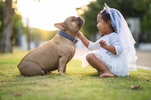 French Bulldog for Kids
