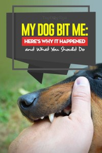 My Dog Bit Me - Reasons Why and What You Should Do