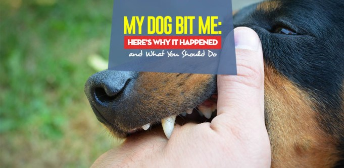 My Dog Bit Me - The Reasons Why and What You Should Do