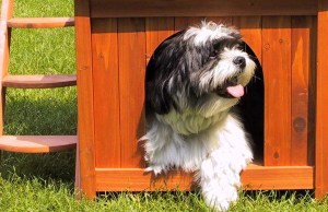 The Best Dog House Bed 2020