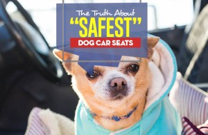 The Truth About the Safest Dog Car Seat Choices