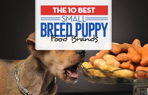 Top 10 Best Small Breed Puppy Foods