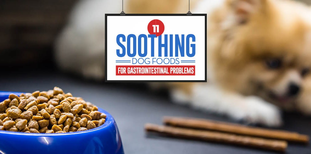 Top 11 Best Dog Food for Gastrointestinal Problems