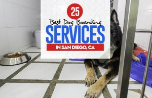 Top 25 Best Dog Boarding Services in San Diego