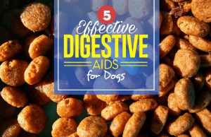 Top 5 Best Digestive Aids for Dogs