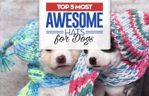 Top 5 Best Dog Hats for Every Occasion
