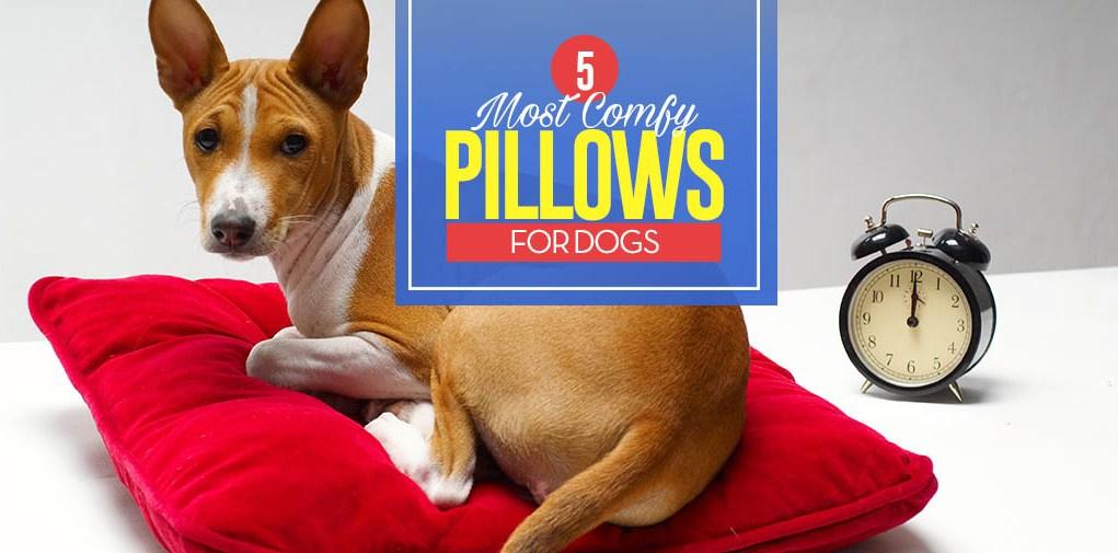 Top 5 Best Dog Pillows and Pillow Beds