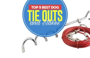 Top 5 Best Dog Tie Out and Stake Choices