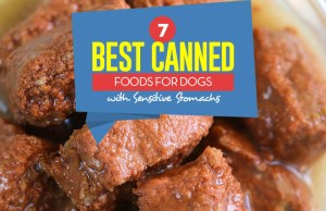 Top 7 Best Canned Dog Food for Sensitive Stomach