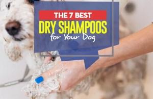Top 7 Best Dry Dog Shampoo and Deodorizing Spray