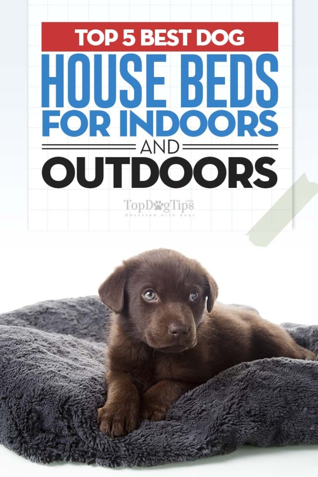 Top Rated Dog House Beds 2020