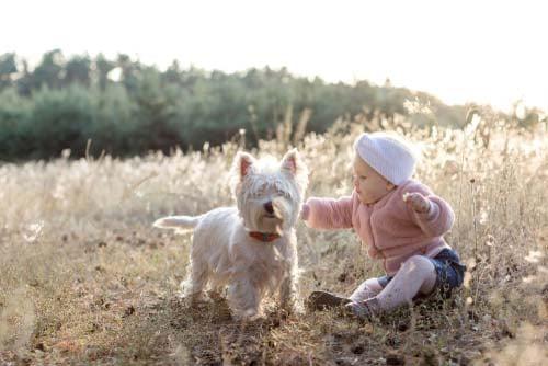 West Highland White Terrier for Kids