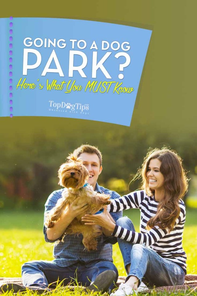 What to Know if Going To a Dog Park for the First Time
