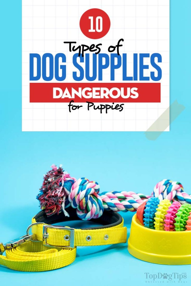 10 Dog Supplies Dangerous for Puppies
