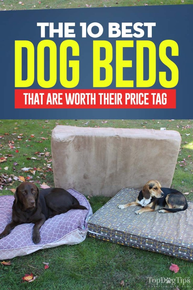 10 Top Rated Best Dog Bed Brands
