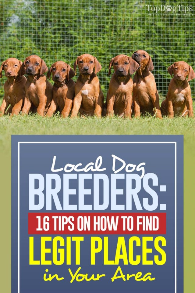 16 Best Tips on Finding and Pick Local Dog Breeders