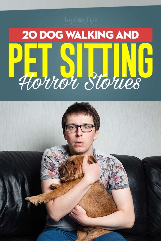 20 Crazy Dog Walking and Sitting Horror Stories