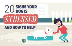 20 Signs of Stress in Dogs Infographic