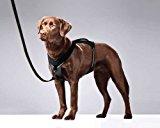 Kurgo Go-Tech Everyday Reflective Dog Harness