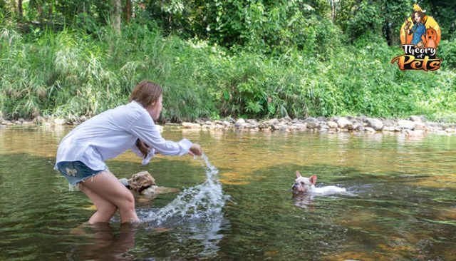 Exciting Ways to Get Active With Your Dog