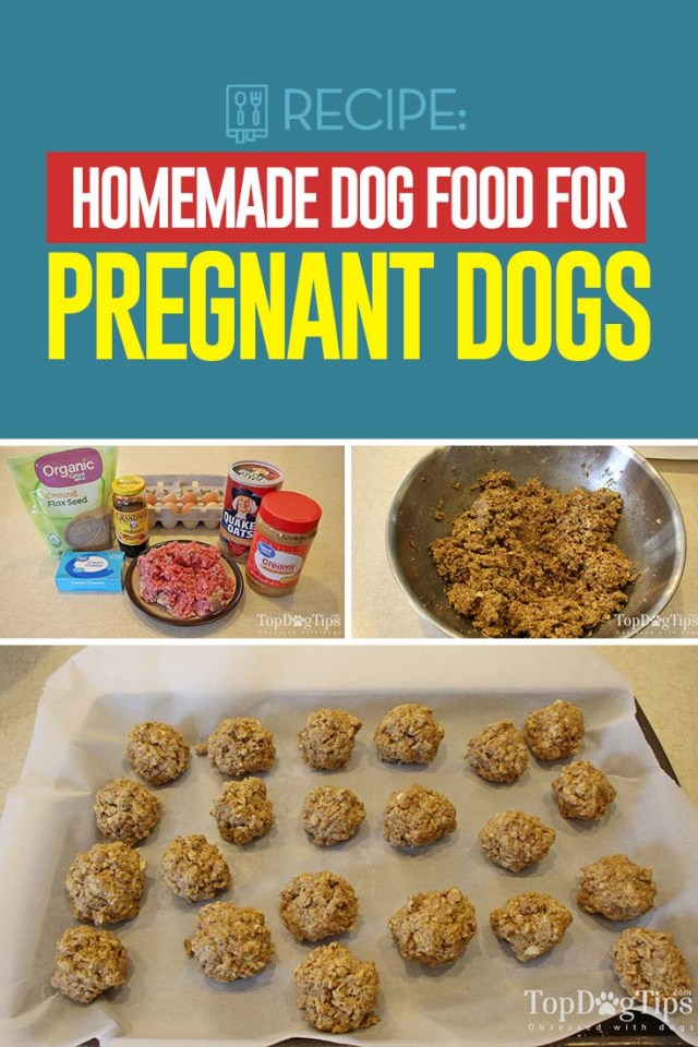 Homemade Dog Food for Pregnant Dogs Recipe