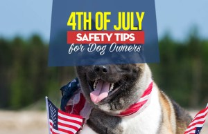 The 4th of July Safety for Dogs - How to Keep Your Pet Safe