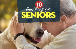Top 10 Best Dogs for Seniors and How They Benefit the Elderly