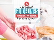 6 Nutritional Guidelines for Homemade Dog Food Cooking
