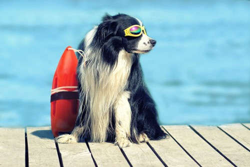7 Pool Safety Tips for Dogs and Cats
