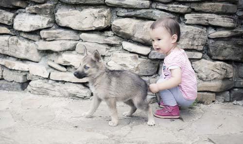 Children Must Respect the Dog