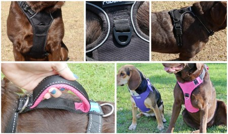 Different Types of Dog Harnesses Explained